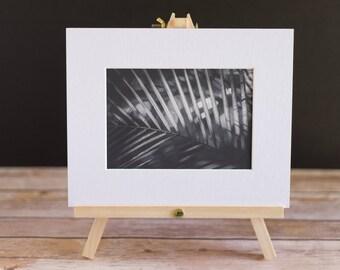 Fine Art Macro 5x7 Black and White Matted Print - Fern Light