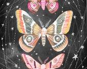 Wandering Moths Art Print    Nocturnal Wall Art   Katie Daisy   8x10   11x14