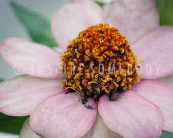 THE LITTLE THINGS 8x12 Pink Flower Fine Art Print
