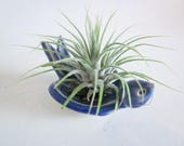 Air plant planter, Cubicle decor, air plant stand, air planter, Desk decor, blue bird planter, ring holder ring dish