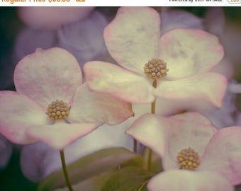 SUMMER SALE-Ends July 5- Flower Photography Botanical Photo Dogwood Flower Purple Pink Mauve Feminine Delicate Spring Floral flo2