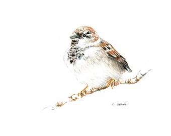 Little Bird Original Hand Drawn Colored Pencil Sketch