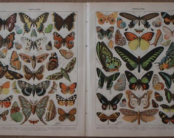 TWO Vintage Prints of PAPILLONS (Butterflies) 1897-1904  by Adolphe Millot from the Nouveau Larousse Illustre