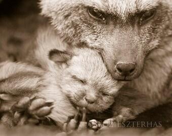 MOM and BABY ANIMAL Photography, Nursery Art Prints, Set of 4 Sepia Photos, Fox, Tiger, Polar Bear, Giraffe, Safari Nursery Art, Kids Room