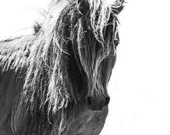 Sable Island Stallion Head On - Fine Art Horse Photograph - Horse - Sable Island - Wild Horse - Black and White -Fine Art Print