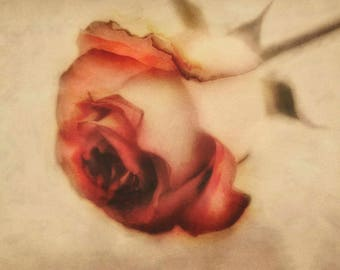 Distressed rose print vintage inspired watercolor photography red and white rose shabby chic nature print wall art fine art photograph decor