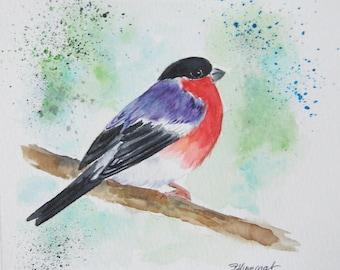bouvreuil, oiseau, nature, aquarelle, art animalier