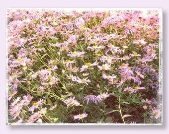 Flower Photography, Michaelmas Daisy, Aster Flower Photo, Botanical Fine Art Print, Pink Flower, Floral Photography, Vintage Feel