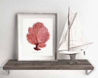 Coastal Decor Sea Fan Sea Coral Natural History Giclee Art Print 8x10 - Color:  Sunset Red