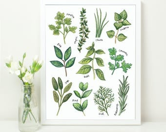 Culinary Herbs Kitchen Print. 10x8. Common Cooking Herbs. Botanical Study Style Illustration. Bay. Rosemary. Parsley. Sage.Chives. Coriander