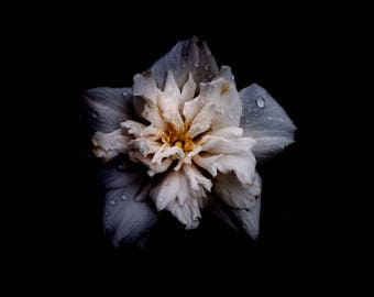 11x14 Print Flower in the Rain with Available Matboard Mounting