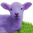 PurpleLamb