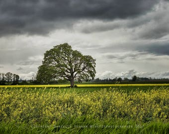 Nature Photography | Tree Photo | Old Oak Tree Print | Flower Field | Country Photo | Dreamy Photography | Oregon Photo | Yellow Flowers