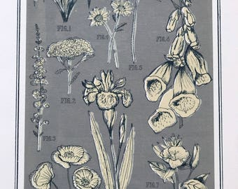 British Wild Flowers - grey and cream silk screen print.