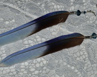 Feather Earrings -  Parrot Feather Earrings - Blue Parakeet Feather Earrings