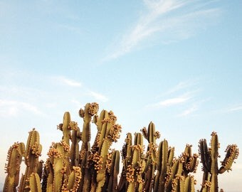 Oversized wall art photograph - Cactus against a blue sky