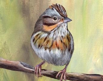 SALE Bird Art Painting Lincoln's Sparrow SFA Wildlife Original hand painted bird acrylic painting by Australian Artist Janet M Graham
