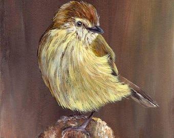 SALE Bird Painting Art Striated Thornbill  Bird SFA Wildlife Original hand painted bird acrylic painting by Australian Artist Janet M Graham