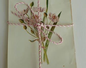Vintage flower prints & text pages/ephemera/