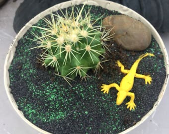 One of a kind succulent garden with real cactus