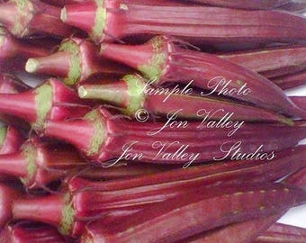 Burgundy Okra 100 Seeds All Natural Non GMO Fun to Grow colorful heirloom Lovely flowers loves summer heat great for gumbo or deep fried