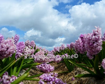 Flower scenery digital download