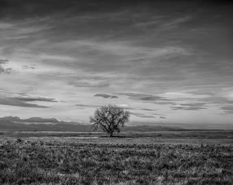 Lone Tree in Colorado.