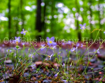 Photo Print - Sprouting