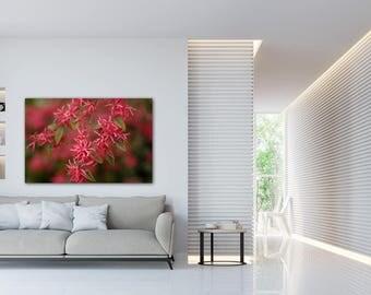 Flower Photos, Flower Photography, Flower Photography Prints, Flower Photograph, Floral Print