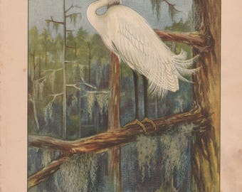 Snowy Egret/Green Heron Antique Bird Print 1926 R. E. Todhunter
