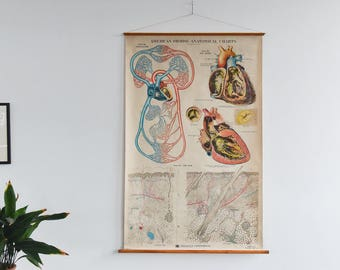 Vintage Large American Frohse Circulation Anatomical Poster Chart
