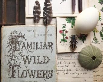Familiar Wild Flowers..1879