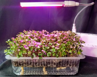 Super Family Grow to Eat + LED  Auto Watering Grow to Eat Microgreen Kits for Daily (32 days) fresh trays and Personal LED Grow Light