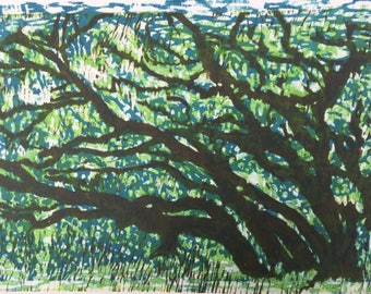 Live Oak Trees at Port Aransas, and Rockport, TX