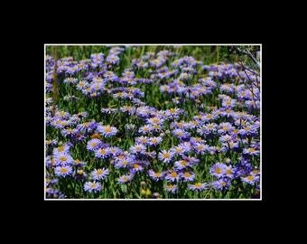 Rocky Mountain Wildflowers II