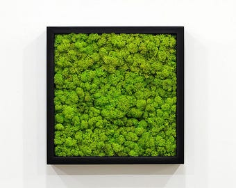 reindeer moss, moss frame,Moss wall, moss art, living plants,wall decor, ,vertical garden, Lichen, preserved moss wooden frame