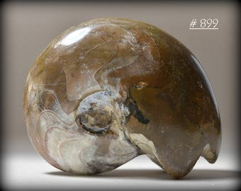 Large, Polished Fossil Ammonite with Good Display Prescence - Collectible Fossil