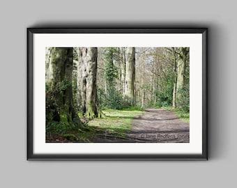Big Wood, Erddig, an Erddig Countrypark Woodland Landscape Photograph.