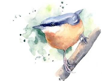 Nuthatch, Nuthatch Watercolour, Watercolour Bird Print, Bird, Bird Print - Giclee print from original watercolour, Watercolor print