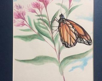 Monarch Butterfly Dreams