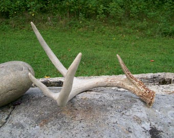 Free Shipping!, Vintage 4 point Real Deer, White tail deer antler, home decoration, diy