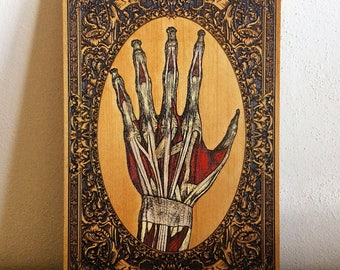 Human Hand Anatomy, Flesh and Bones Skeleton, Doctor Gift, Medical Oddities and Curiosities, Wood Engraved, Hand Painted, Med Student Gift