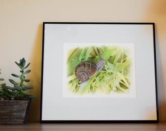 Snailed it! - Garden Snail Gouache Painting - Framed - Original