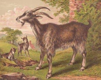 Goat with Adorable Kid Goats Farm Animals Antique Goat Lithograph Art Print 1873