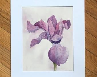 Pink Iris, original watercolor, original painting, pink flower, watercolor painting, small artwork, iris flower art, floral painting