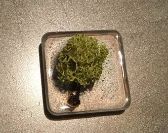 Twig with Moss Magnet