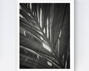 Palm leaf photo, palm leaf print, palm leaves poster, leaf photography, palm leaves, palm leaf decor, leaves wall art, nature photography