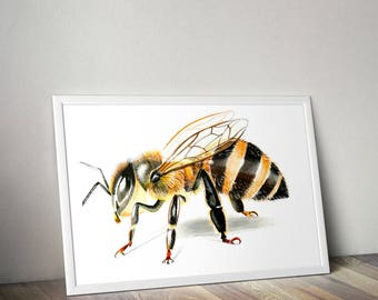 HONEY BEE PRINTS realistic drawing wall art  Copic markers graphics coloring animal artwork poster Bee