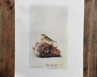 Vintage Botanical Bird Print Page
