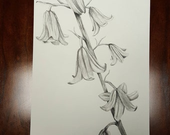 Original Charcoal Bell Flower Drawing